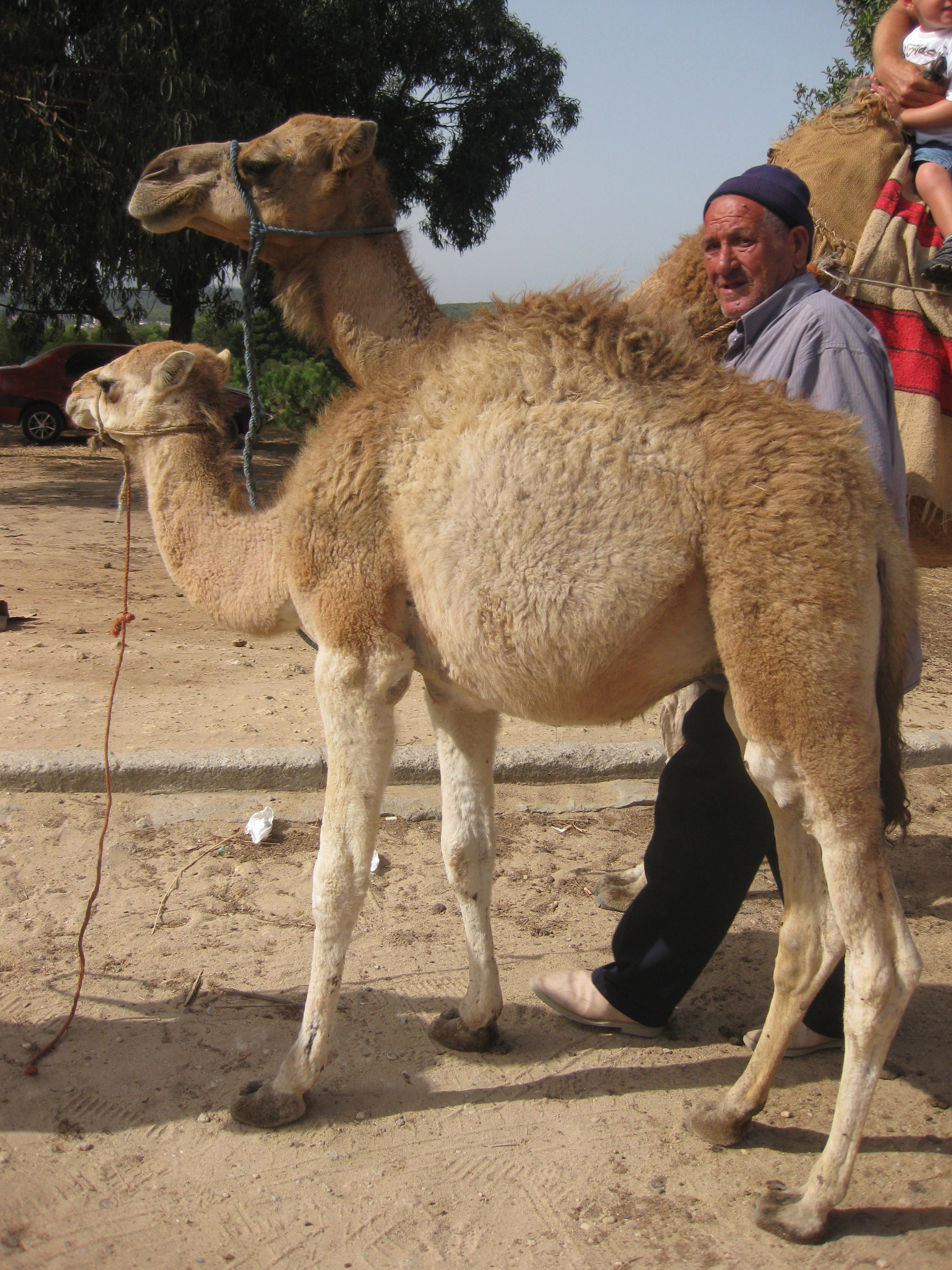 trip africa northern morocco spain portugal