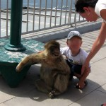 baby and ape, gibraltar