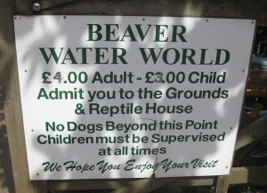 Beaver Water World. Copyright Gretta Schifano