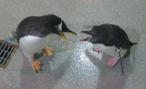 Penguins, SeaWorld Orlando. Copyright Gretta Schifano