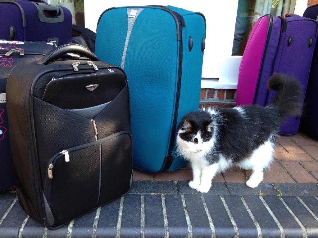 Suitcases. Copyright Gretta Schifano
