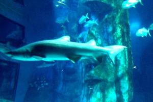 Sealife London Aquarium. Copyright Gretta Schifano