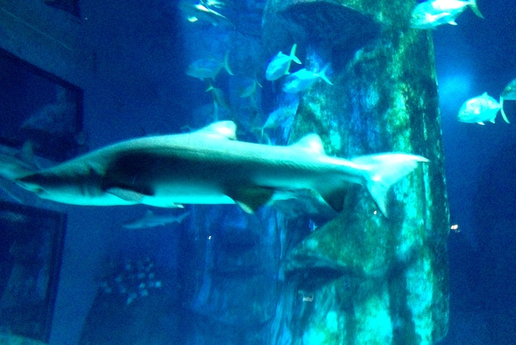 Sea Life London Aquarium Mums Do Travel