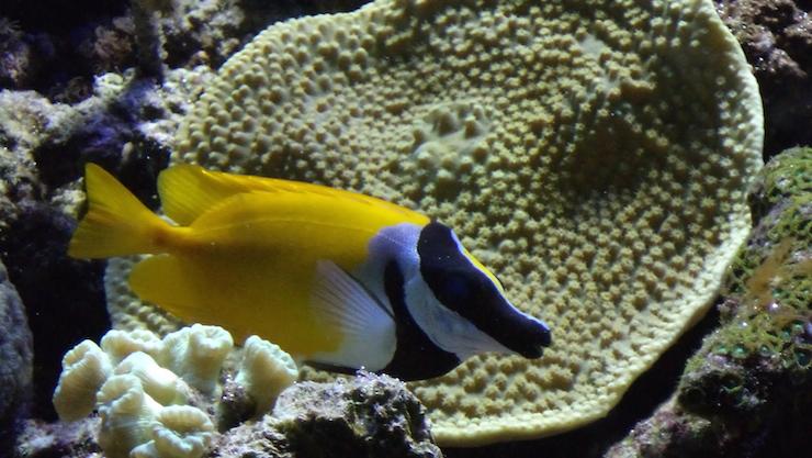 Barcelona Aquarium. Copyright Lorenza Bacino