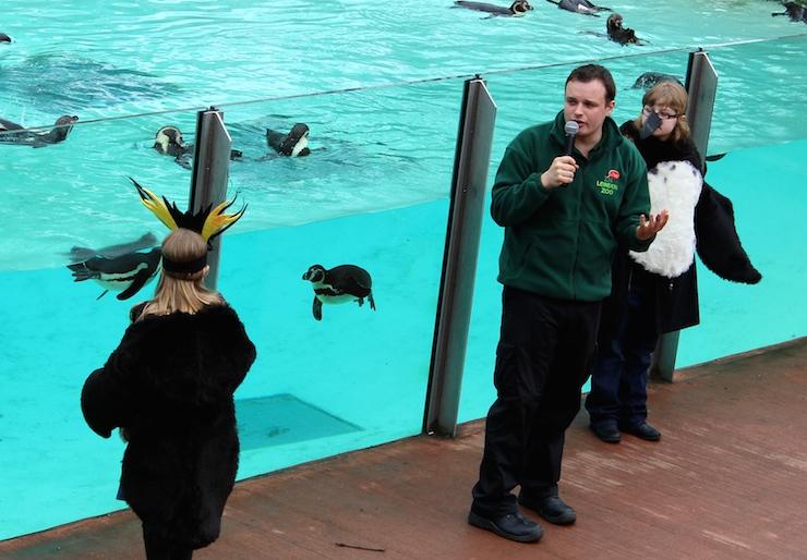 Penguin Beach Live, London Zoo. Copyright Gretta Schifano