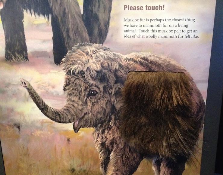 Mammoths exhibition. Copyright Gretta Schifano