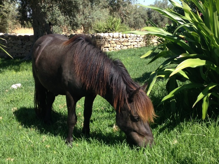 Staying on a farm in Sicily