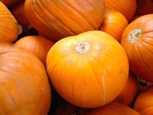Halloween pumpkins. Copyright Gretta Schifano
