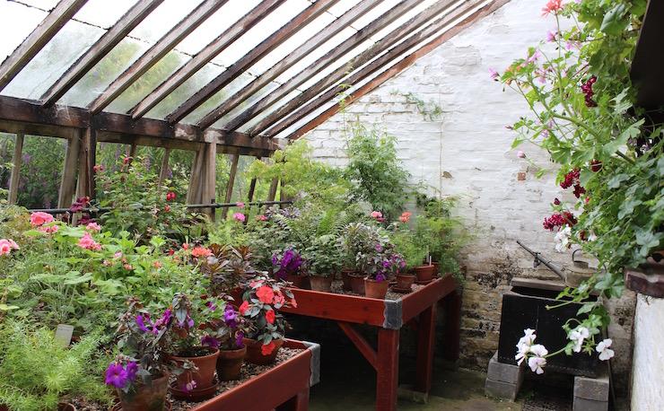 Greenhouse, Quex gardens. Copyright Gretta Schifano