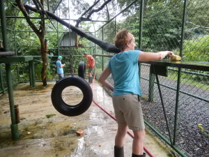 Lorenza cleaning a monkey cage at Proyecto Asis, Costa Rica. Copyright Max Rolt Bacino