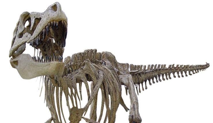 Tarbosaurus skeleton, Horniman Museum. Image courtesy of Horniman Museum