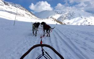 Dog-sledding, Alpe d'Huez. Copyright Gretta Schifano