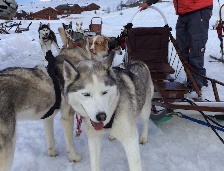 Huskies. dog-sledding, Alpe d'Huez. Copyright Gretta Schifano