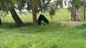 Bears, Woburn Safari Park. Copyright Sharmeen Ziauddin