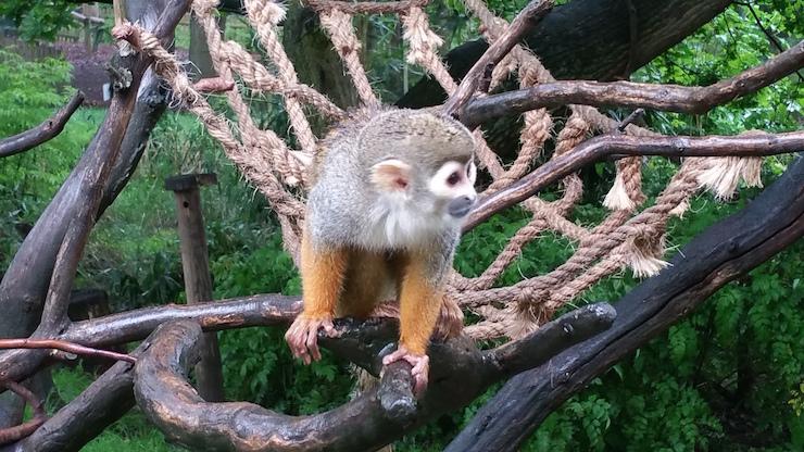 Woburn Safari Park. Copyright Sharmeen Ziauddin