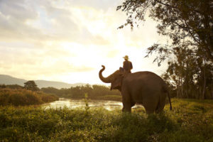 Elephant and mahout, Thailand. Image courtesy of The Turquoise Holiday Company