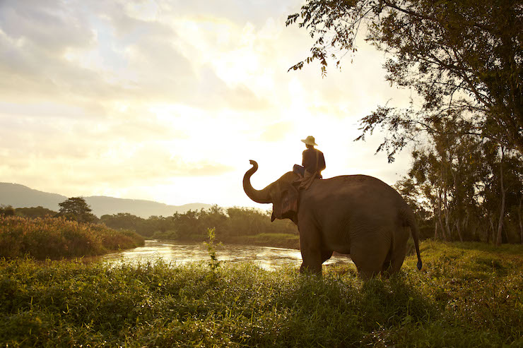 Elephant and mahout, Thailand. Image courtesy of The Turquoise Holiday Company