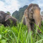 Elephants, Thailand. Image courtesy of The Turquoise Holiday Company