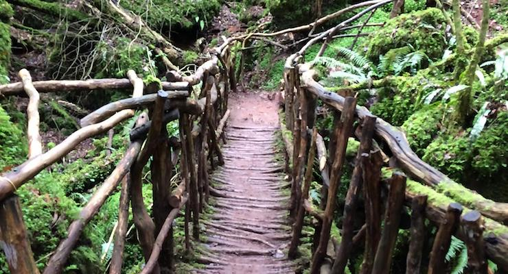 Puzzlewood path. Copyright Gretta Schifano
