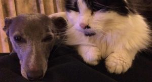 Our cat and dog. Copyright Gretta Schifano