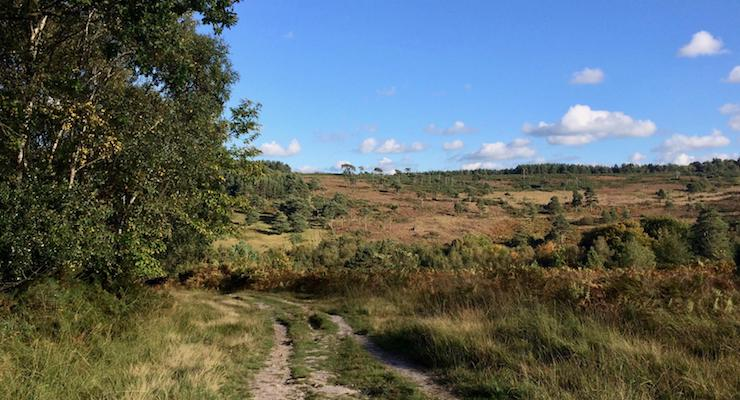 Ashdown Forest. Copyright Gretta Schifano