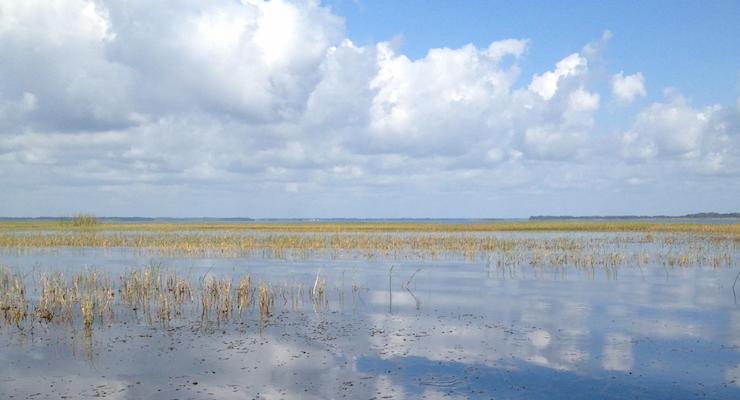 Boggy Creek, Florida. Copyright Gretta Schifano