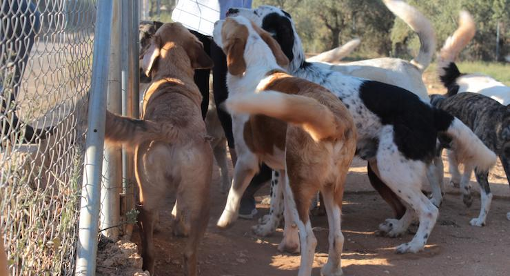 Rescue dogs, Costa Navarino. Copyright Gretta Schifano