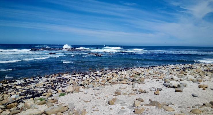 Cape of Good Hope Nature Reserve, South Africa. Copyright Max Rolt Bacino