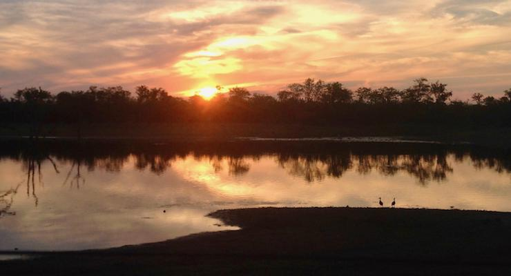 Sunset, Kruger National Park, South Africa. Copyright Lorenza Bacino.jpg