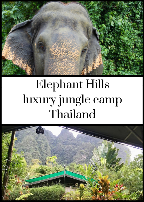 If you'd like to take part in an ethical elephant experience in Thailand, Elephant Hills is the place to go. It's a luxury tented camp in the ancient rainforest of Khao Sok National Park, and has won many animal welfare awards. It also offers soft adventure activities such as canoeing and trekking. We stayed there for four days in August on a family trip with teenagers, and it was brilliant. Click through for full details.