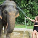 Washing Tim the elephant, Elephant Hills, Thailand. Copyright Gretta Schifano