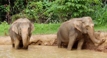 Elephants at the water hole, Elephant Hills, Thailand. Copyright Gretta Schifano