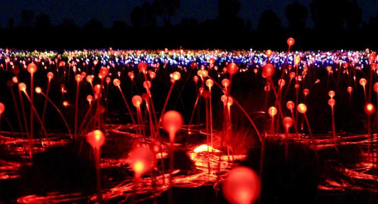 Field of Light, Uluru, Australia. Copyright Max Rolt Bacino