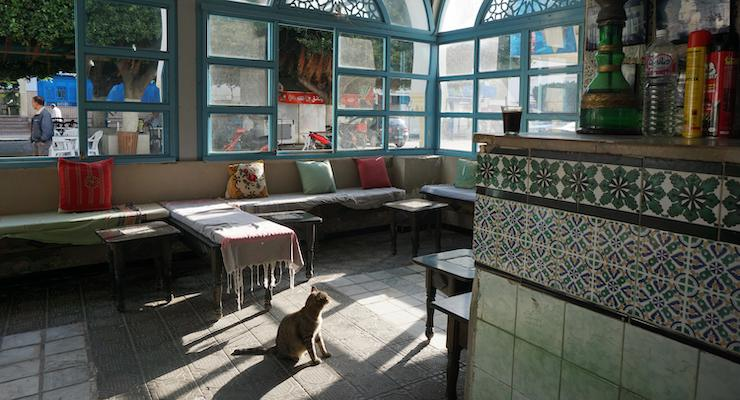 Cat in a cafe in Tunisia. Copyright Kirstie Pelling