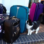 Suitcases packed. Copyright Gretta Schifano