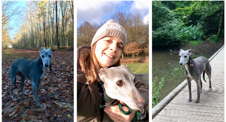 Gretta Schifano with her whippet, Bluebell, in the woods in Surrey.
